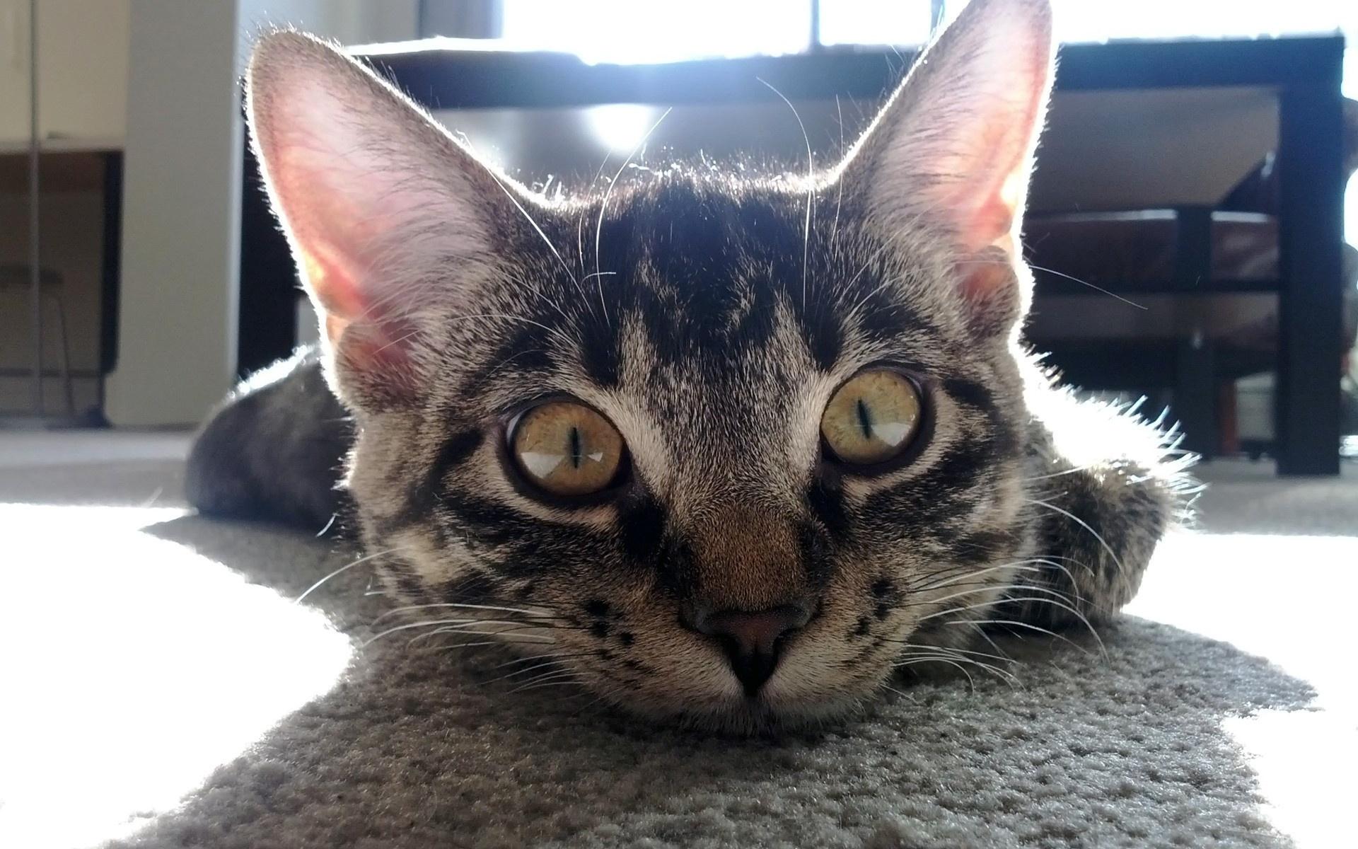 лучи, кот, Пол, стол, cat, уши, тень, комната, прикольный
