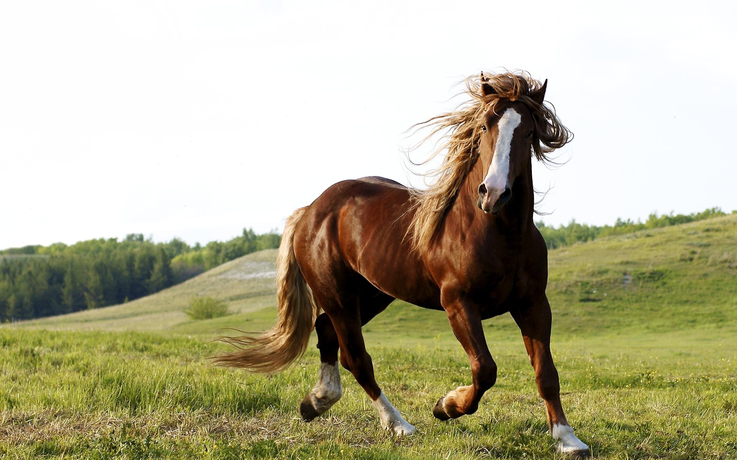 Прикольные, лошади картинки обои