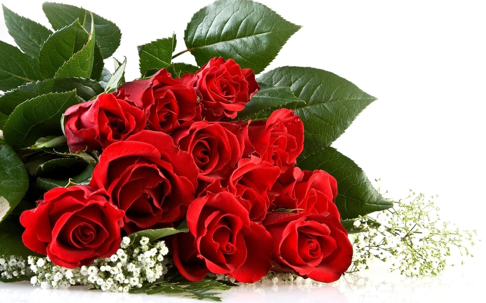 Открытки красивые розы для любимой