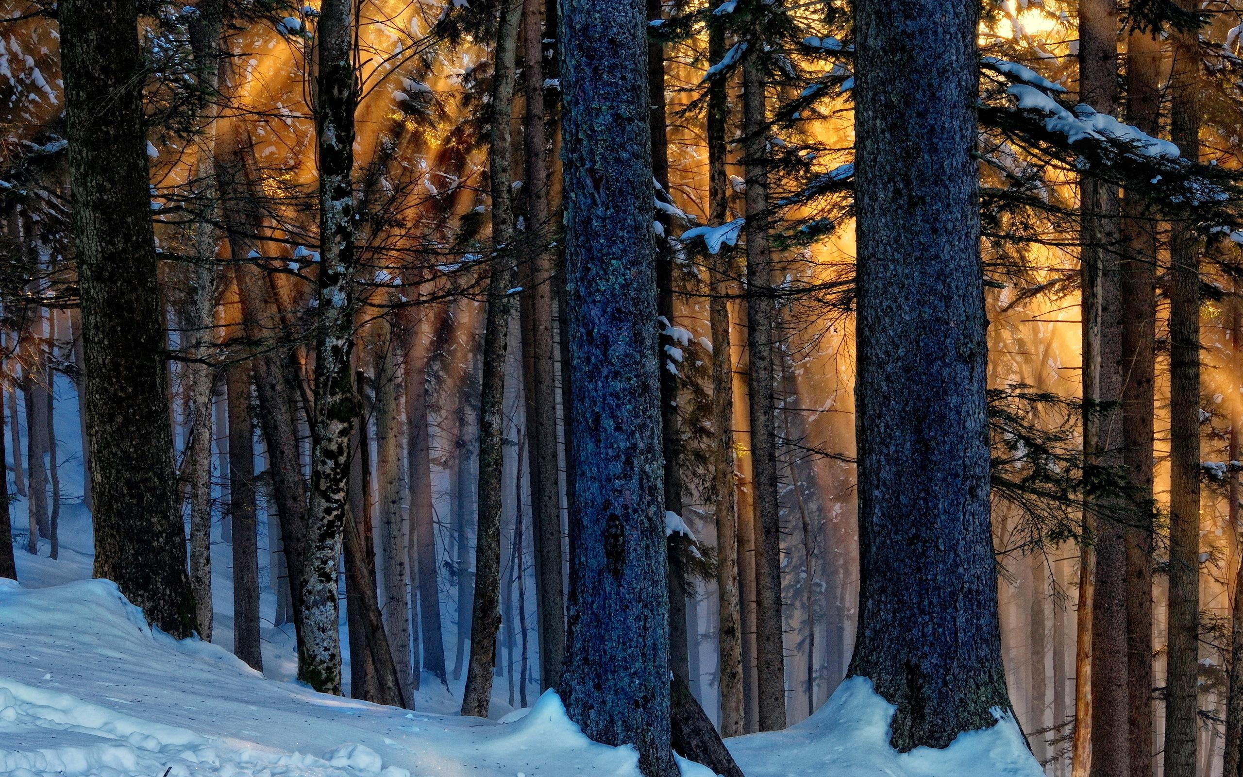 Картинки зимнего леса в хорошем качестве, женщине