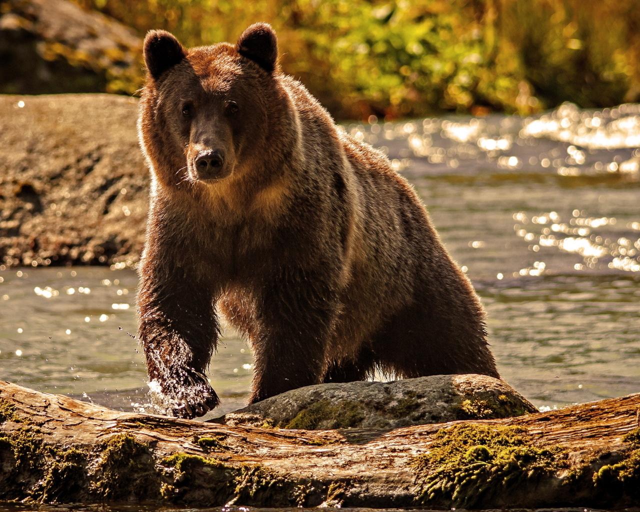 Картинки медведей картинки