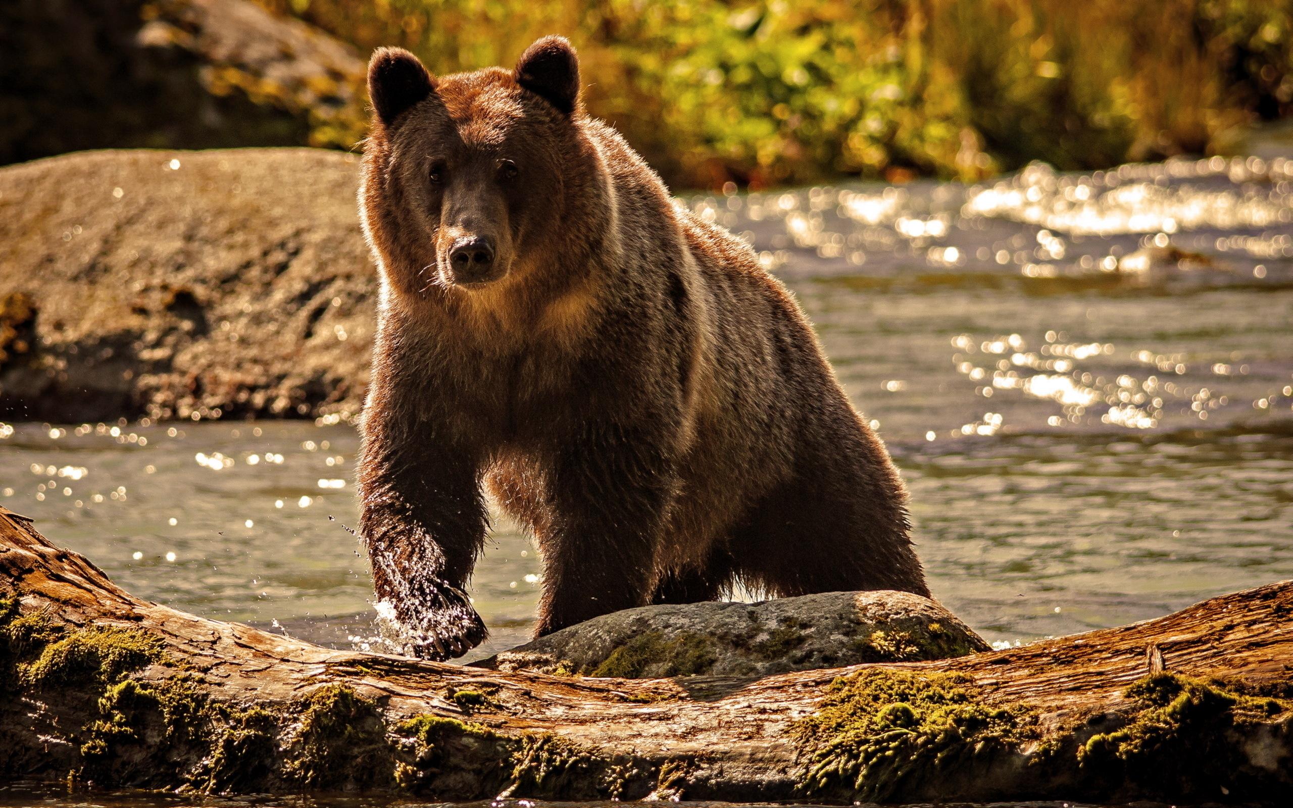 Международный конкурс, картинки классные медведи