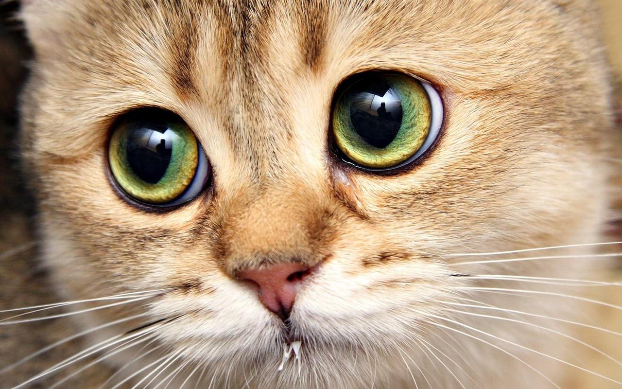 Прикольные картинки и красивые глаза, летием