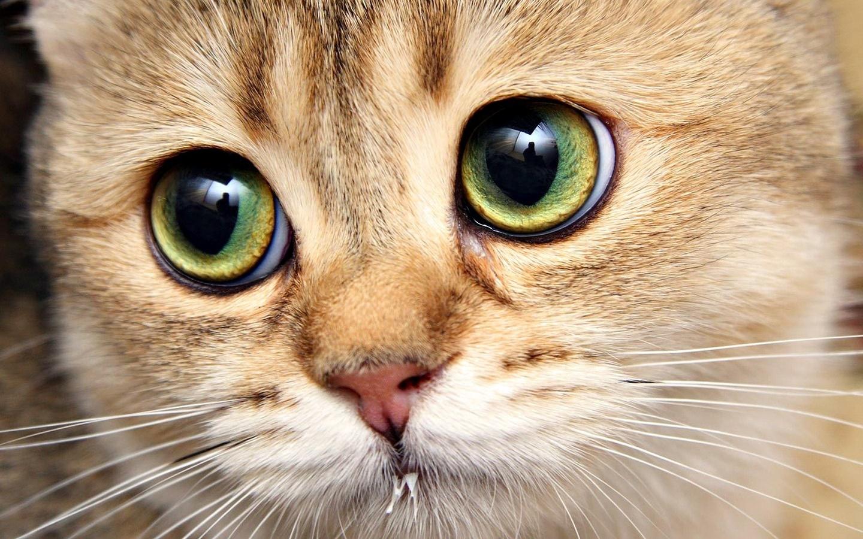 самые милые глаза картинки откроет