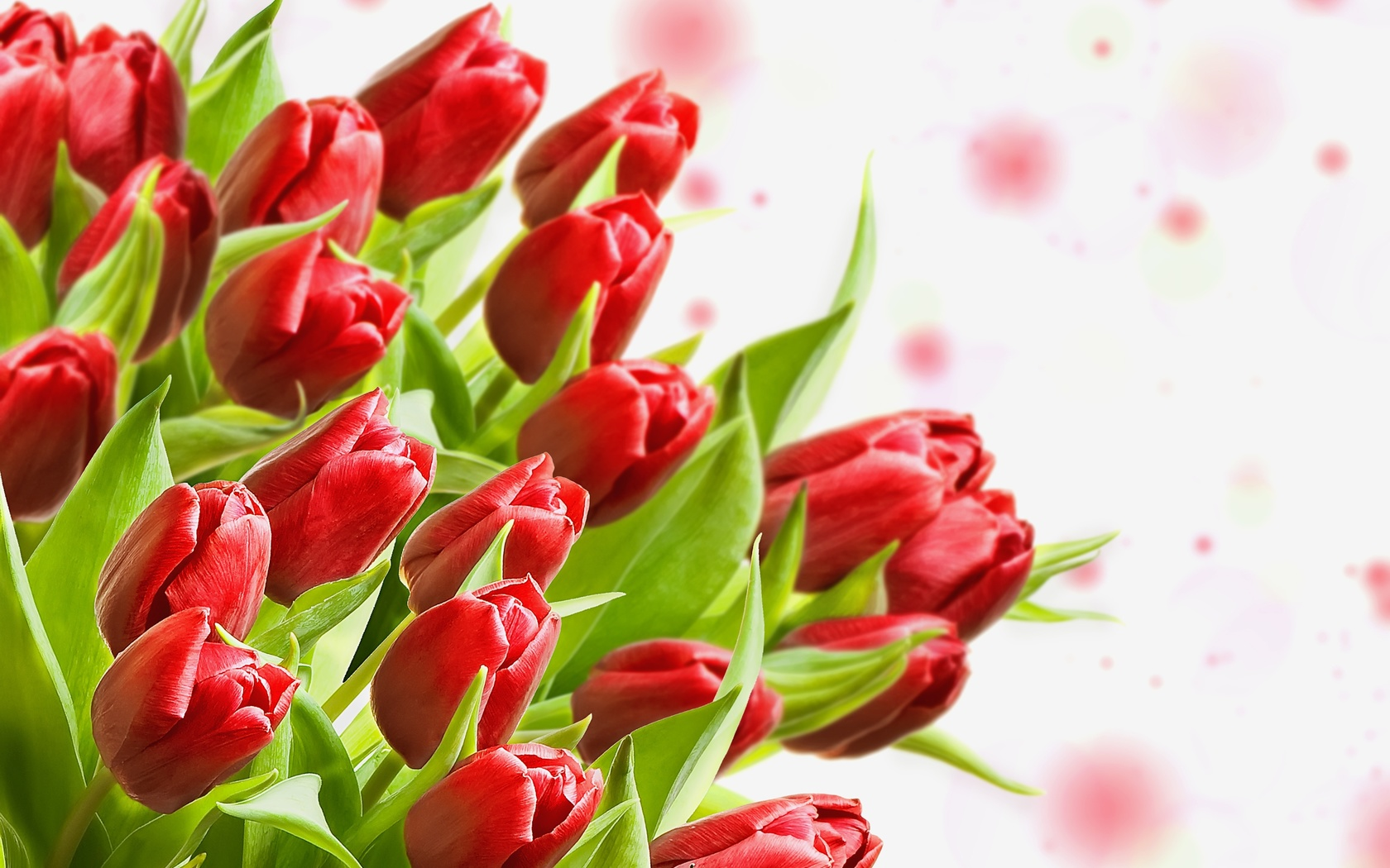 бутоны, тюльпаны, листики, букет