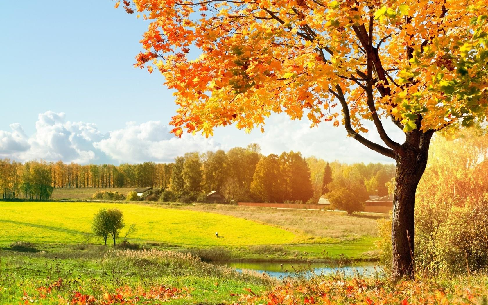 Открытки с осенним лесом