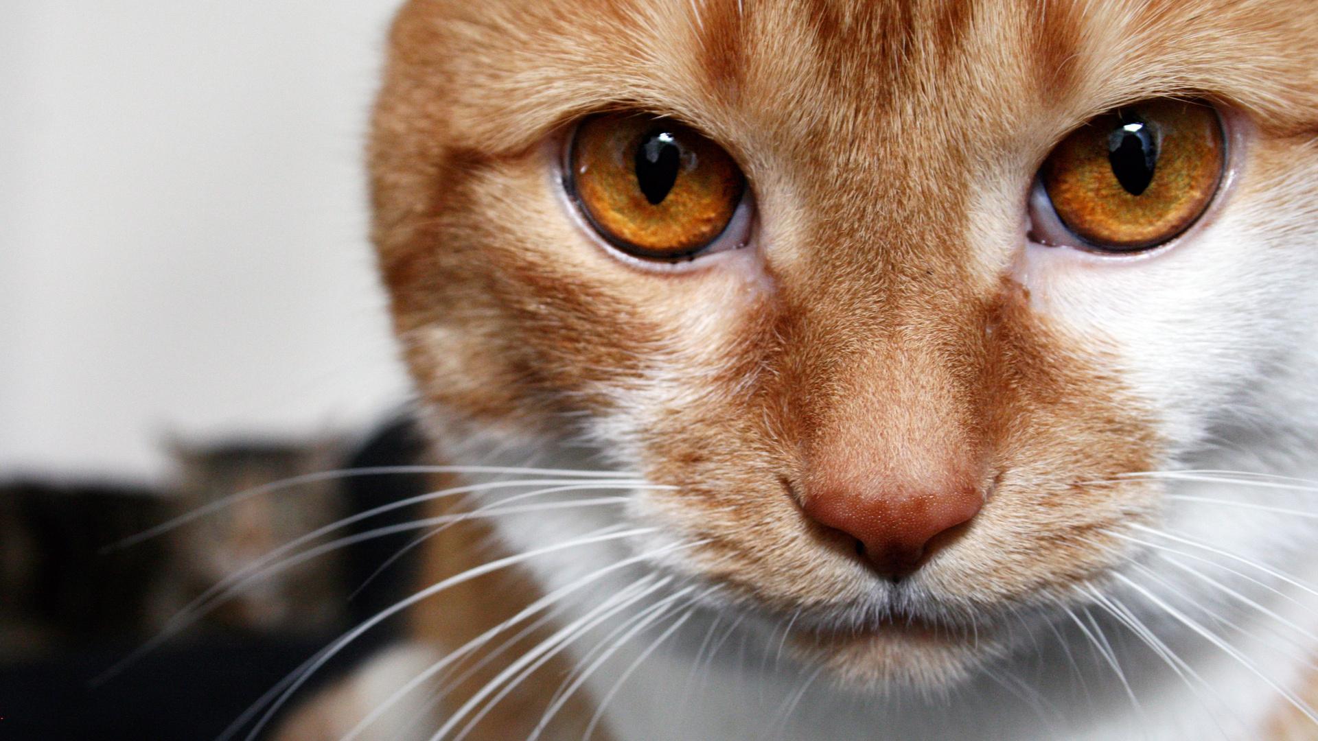 рыжий, cat, кот, смотрит, кошка