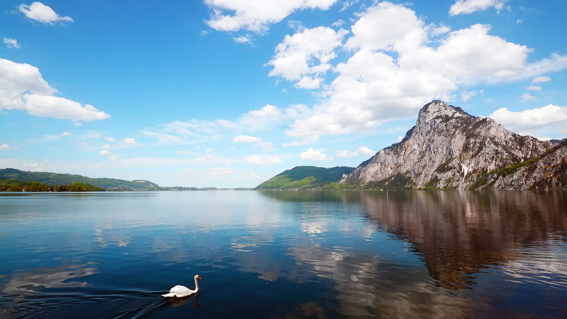 Открытки днем, река лебедь открытки