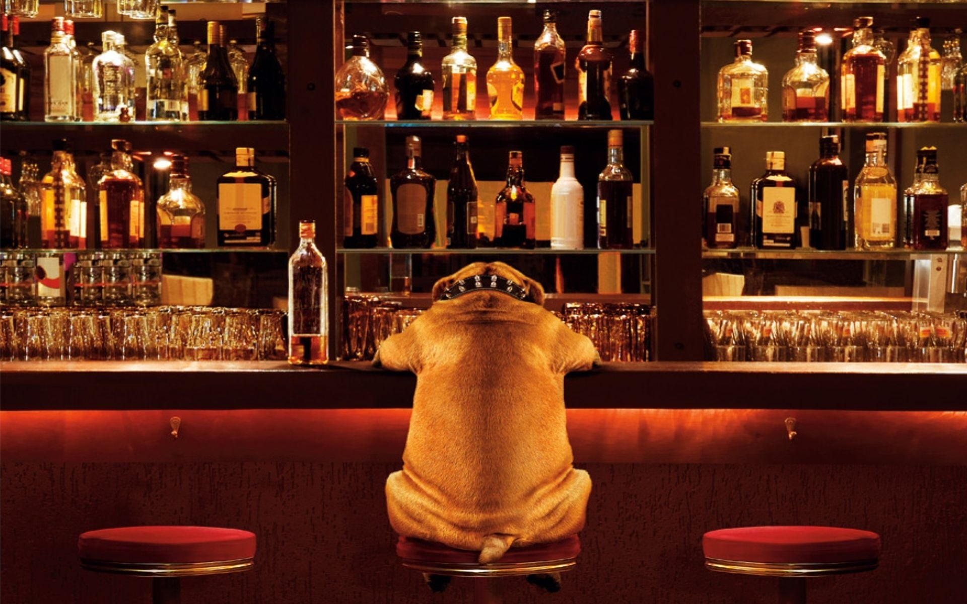 Открытка новый, смешные картинки в бар