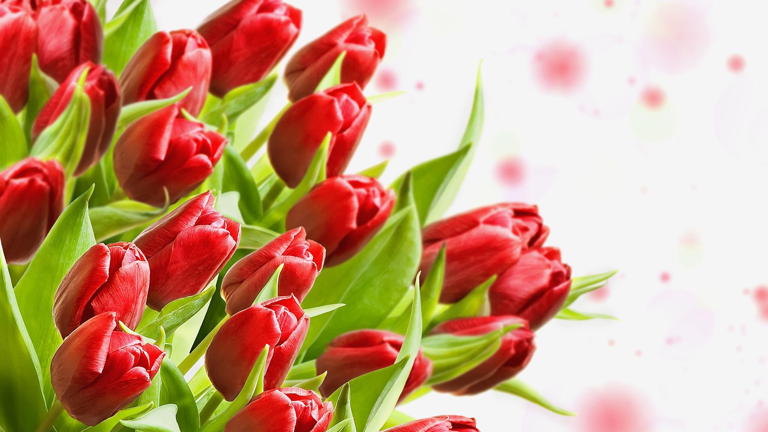 Открытки с тюльпанами без надписей, фото