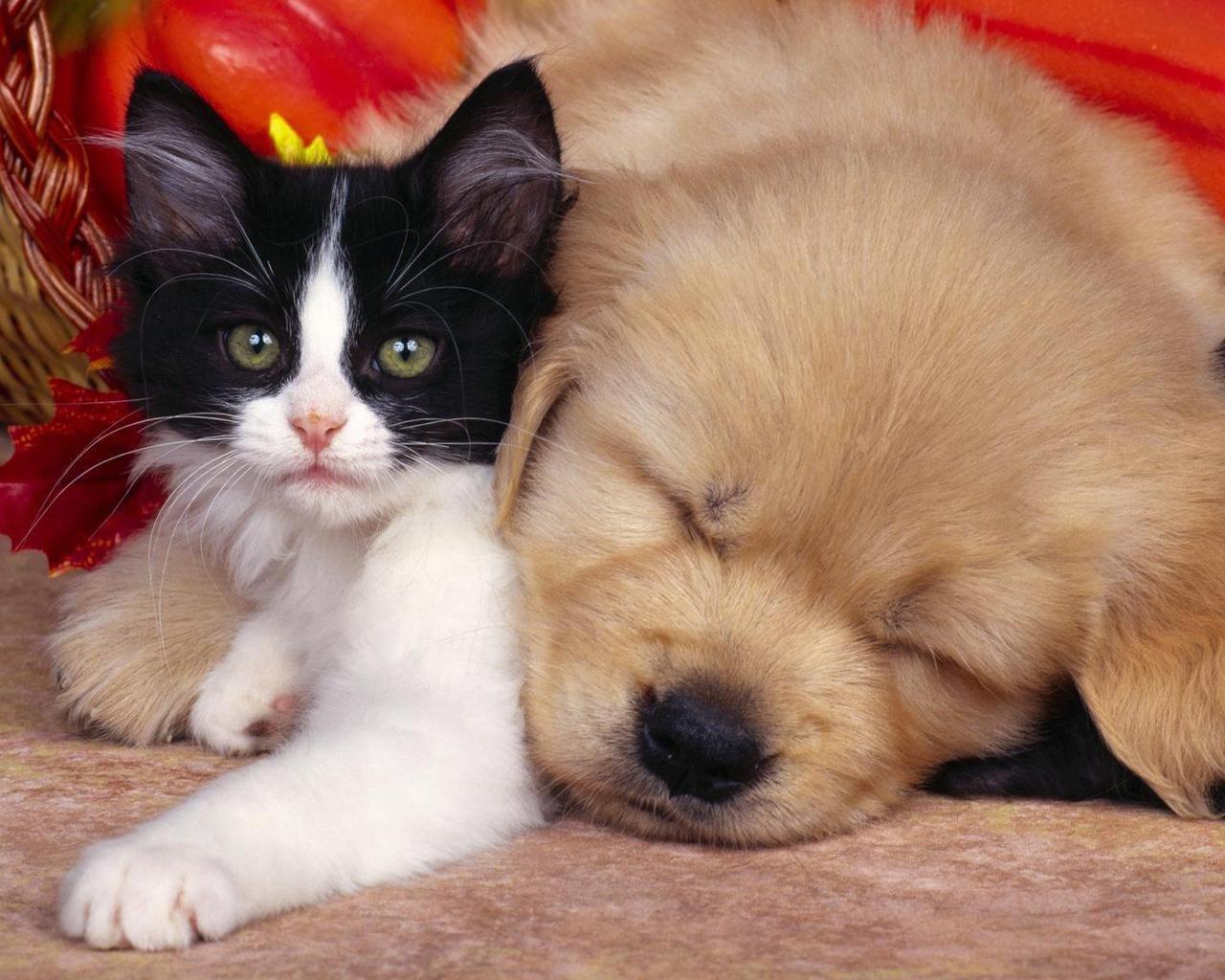 Картинки, котята и щенки прикольные картинки