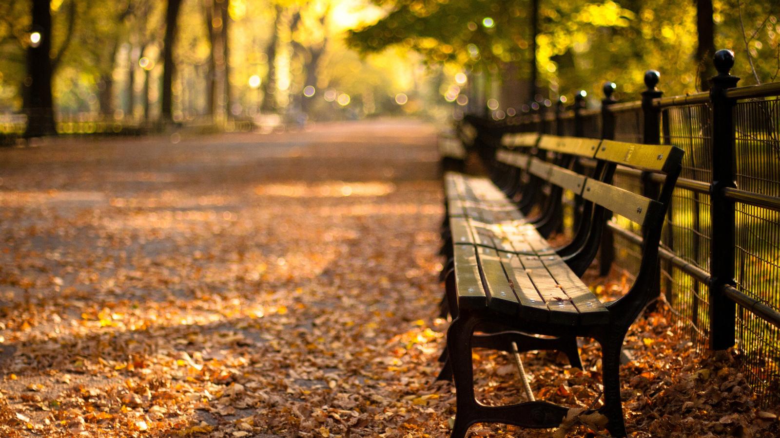 sunset, Central park, new york, autumn, парк, закат, нью-йорк