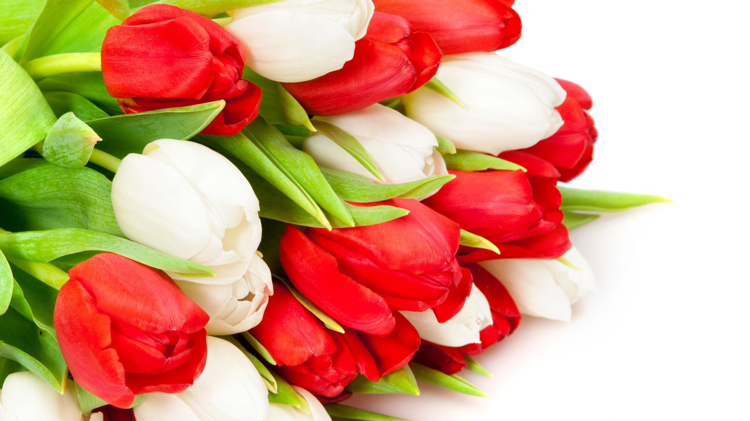 Открытки с красными тюльпанами, медицинской