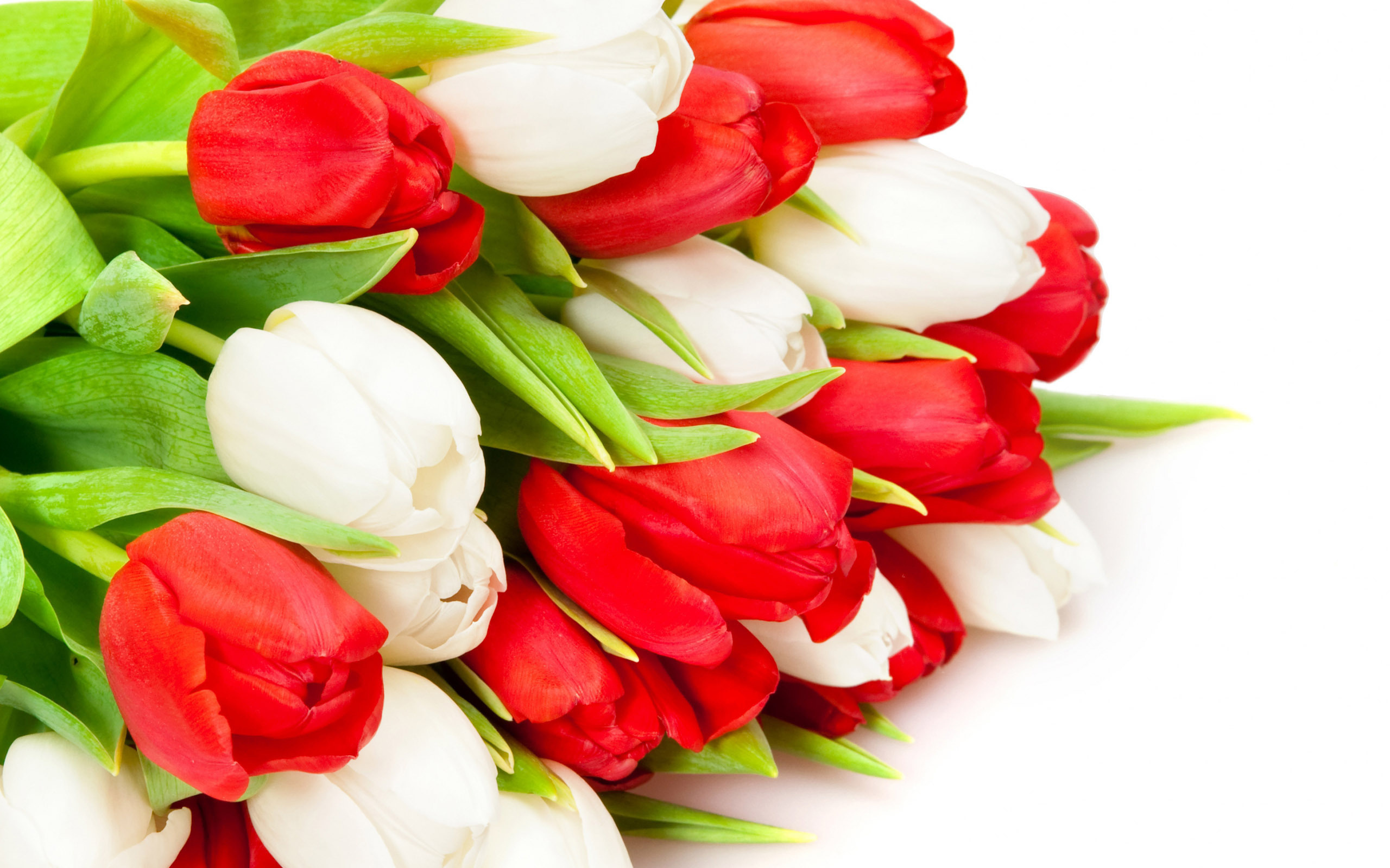 Картинки новогодние, открытки с красными тюльпанами