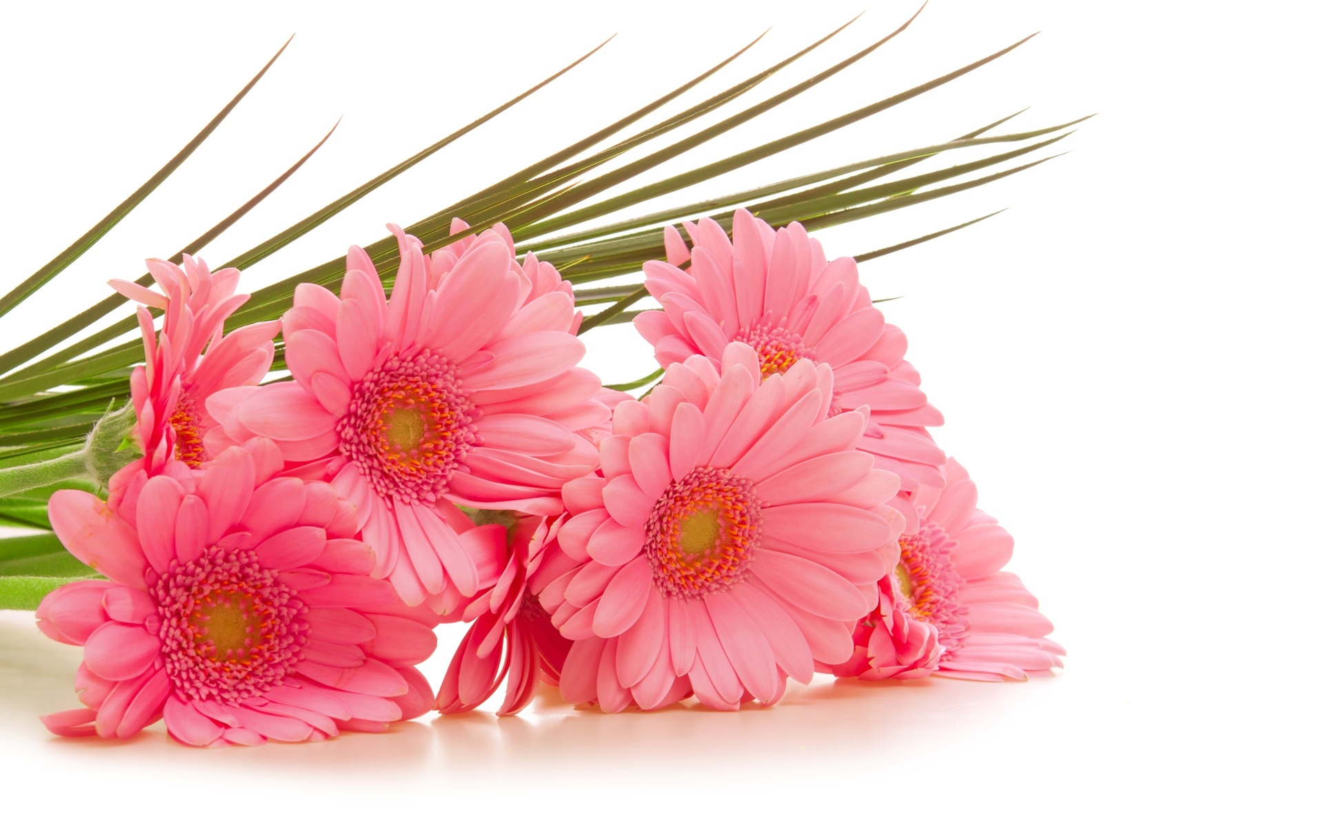 Открытке, картинки цветок на открытку