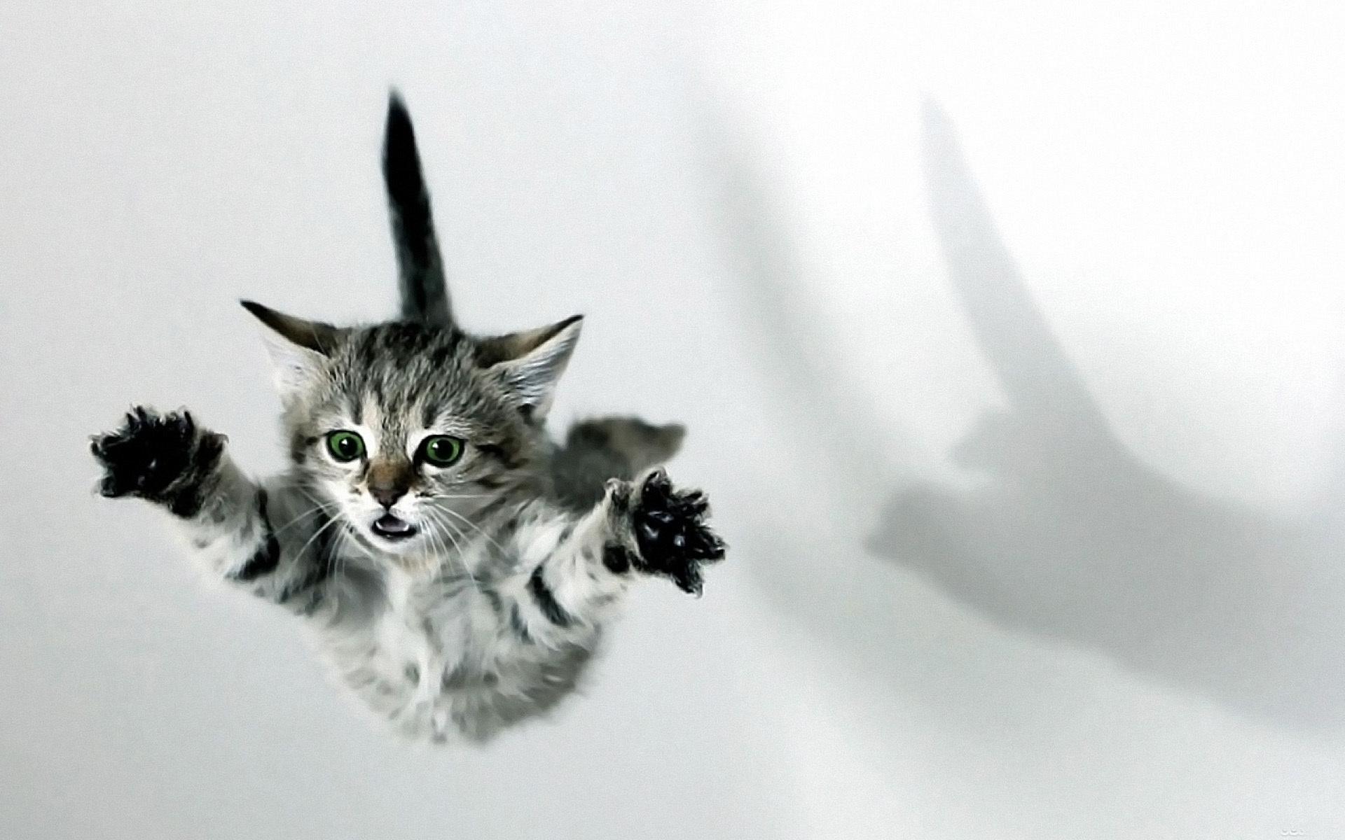 Строят гнезда, прикольные картинки с кошками привет