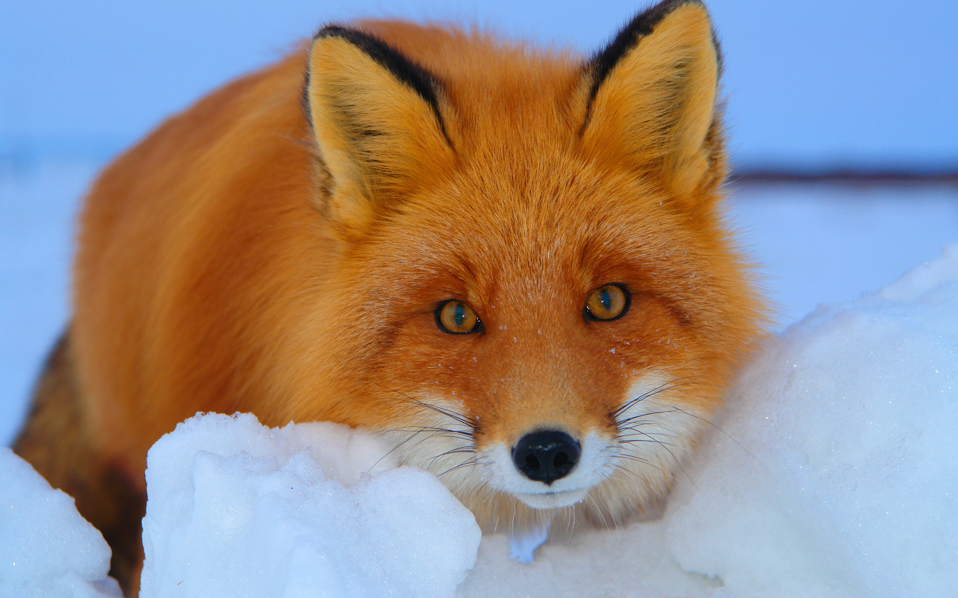Открытки, картинки животные зимой на рабочий стол