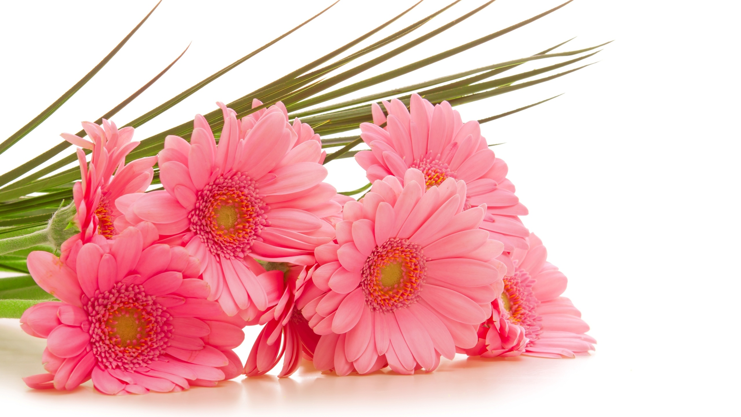 Поздравительные открытки цветы на день рождения, анимационная открытка