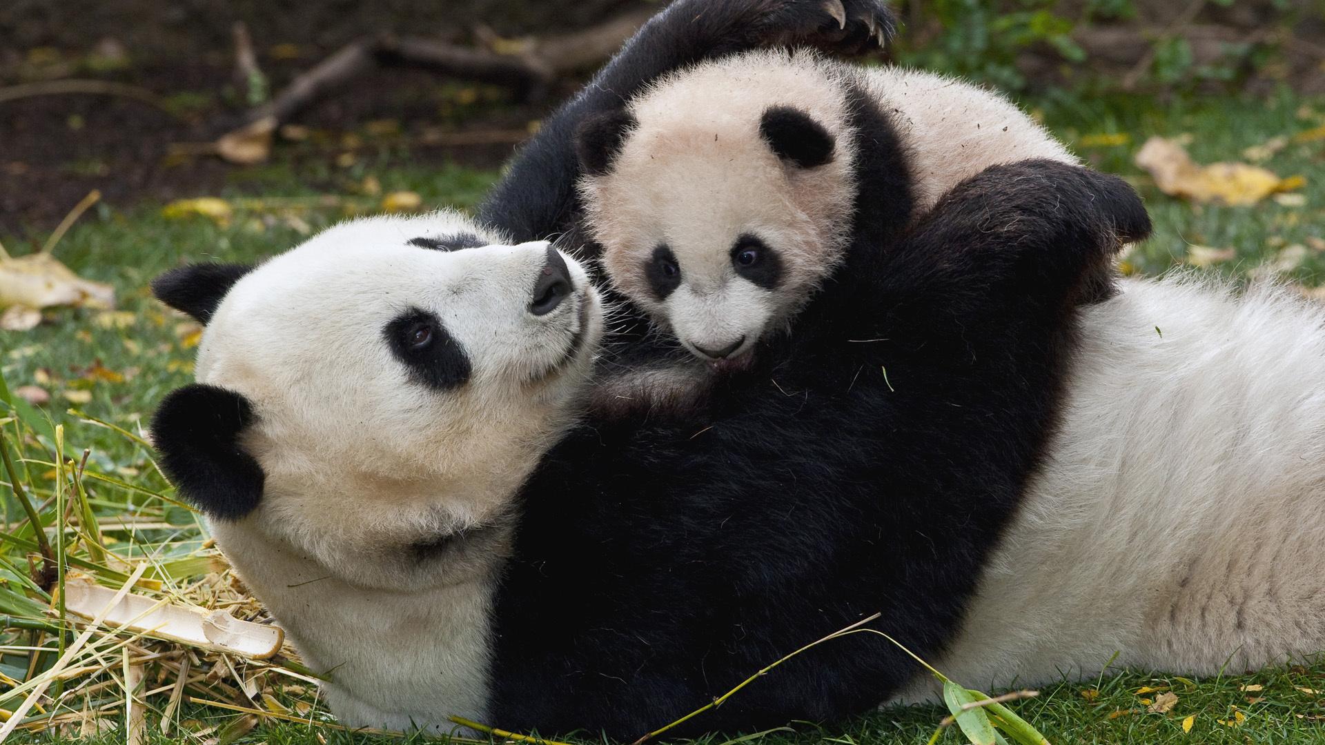 Мама и ребенок животные картинки