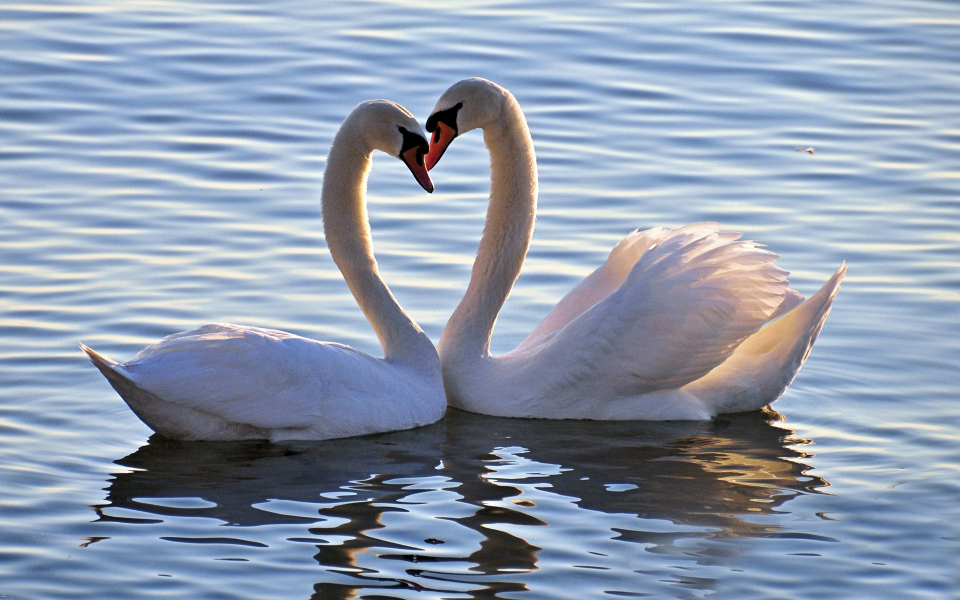 Картинки белые лебеди