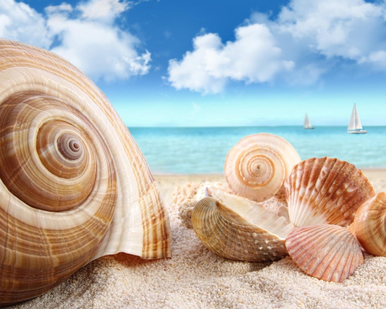 Море картинки ракушки
