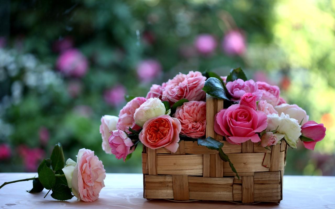 корзинка, Розы, c elena di guardo, лукошко