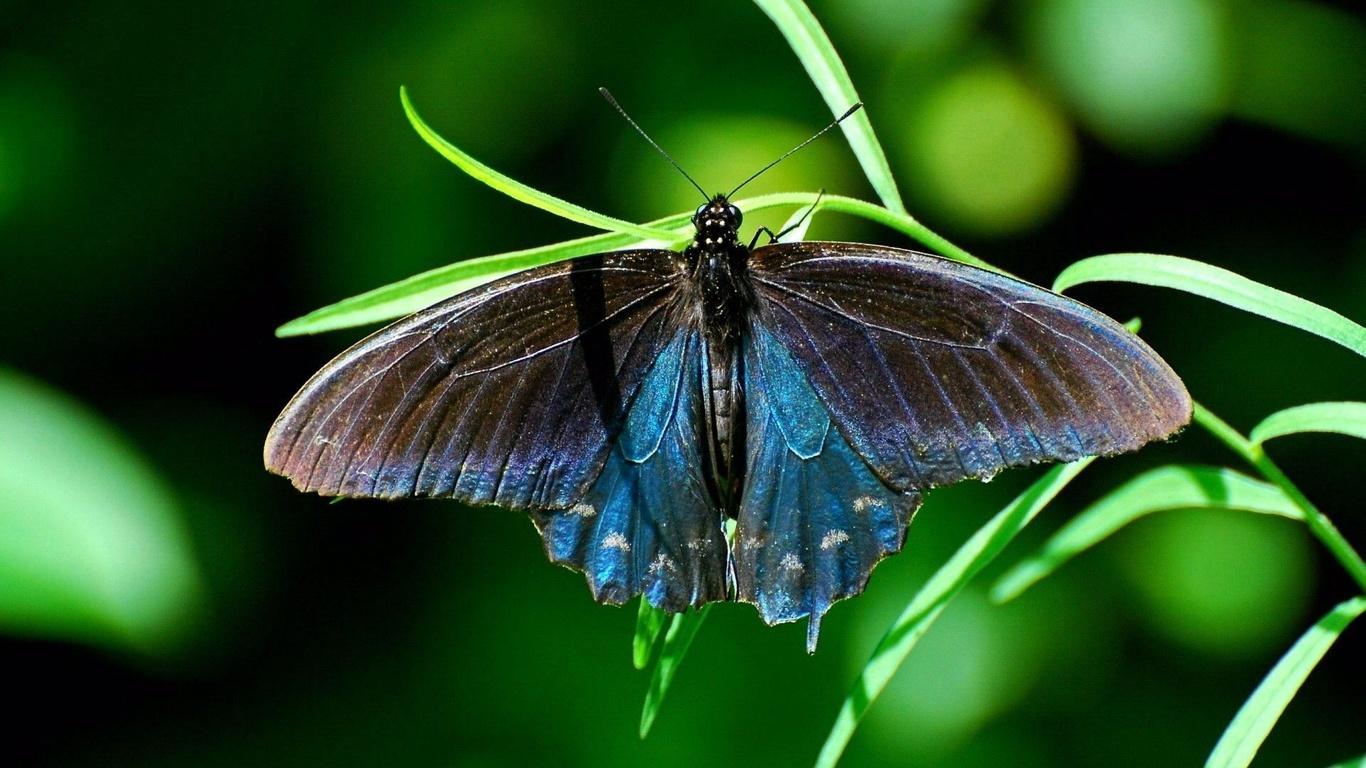 butterfly, насекомое, Бабочка, трава