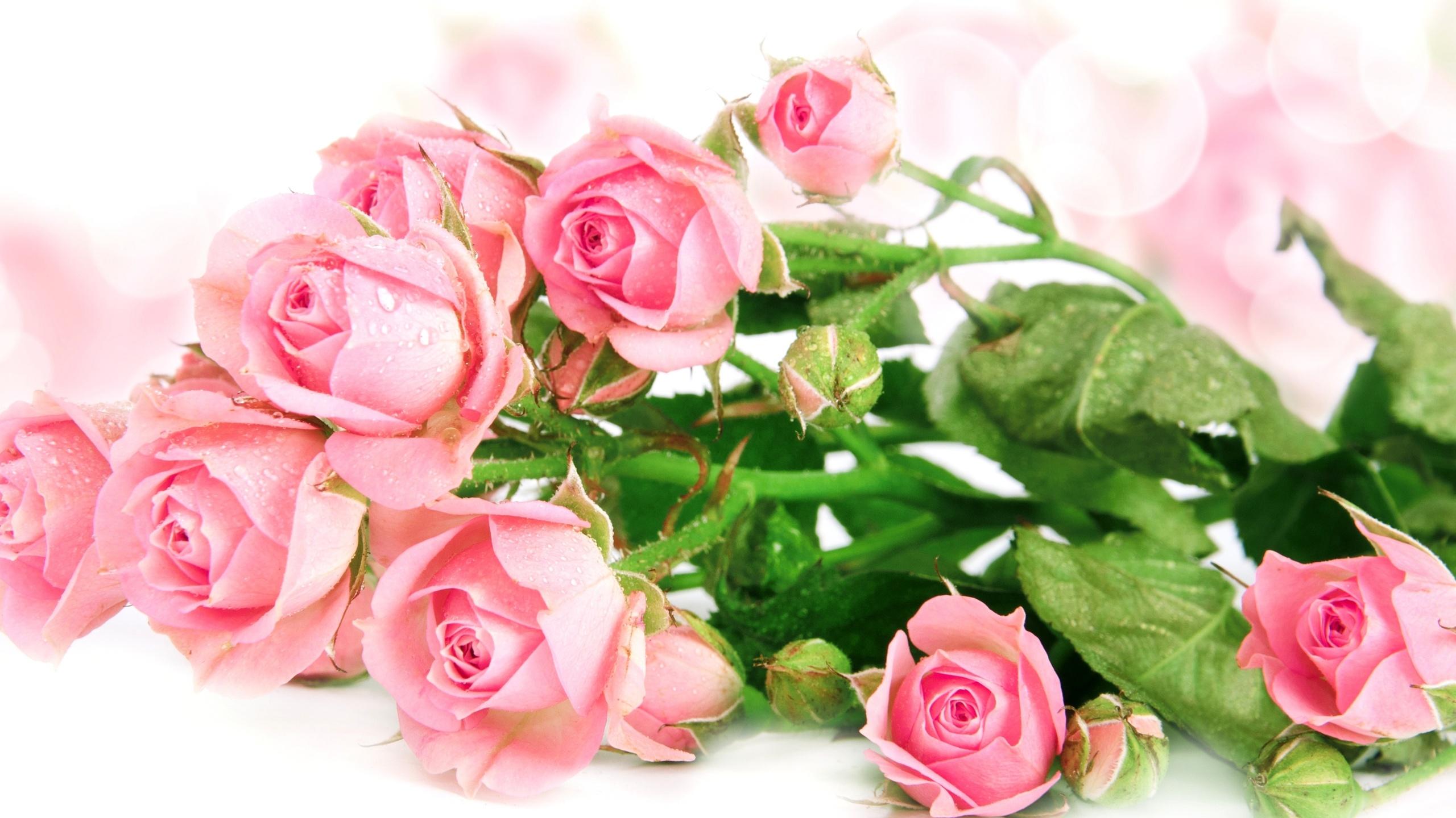 Открытки, открытки с днем рождения розы на белом фоне