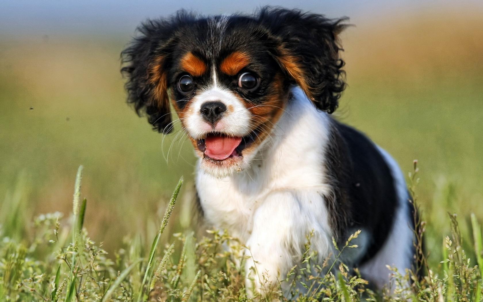 Картинки про собак, доброго утра удачного
