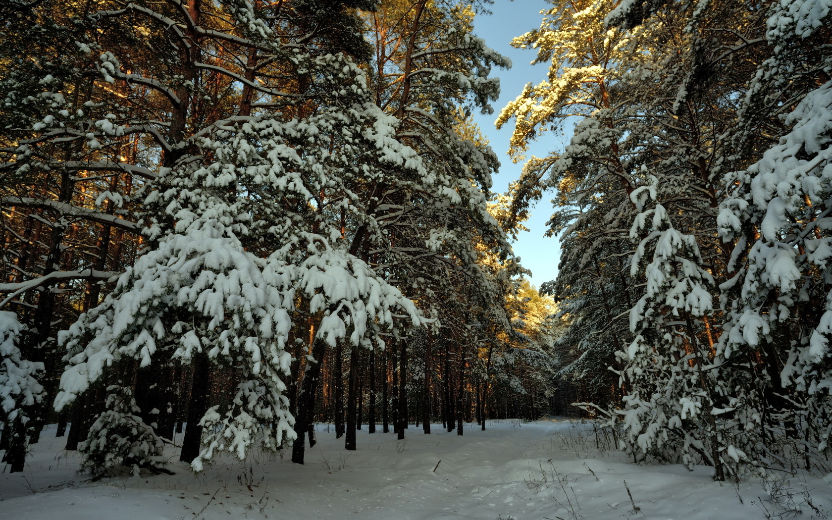 пейзаж, лес, зима, Снег