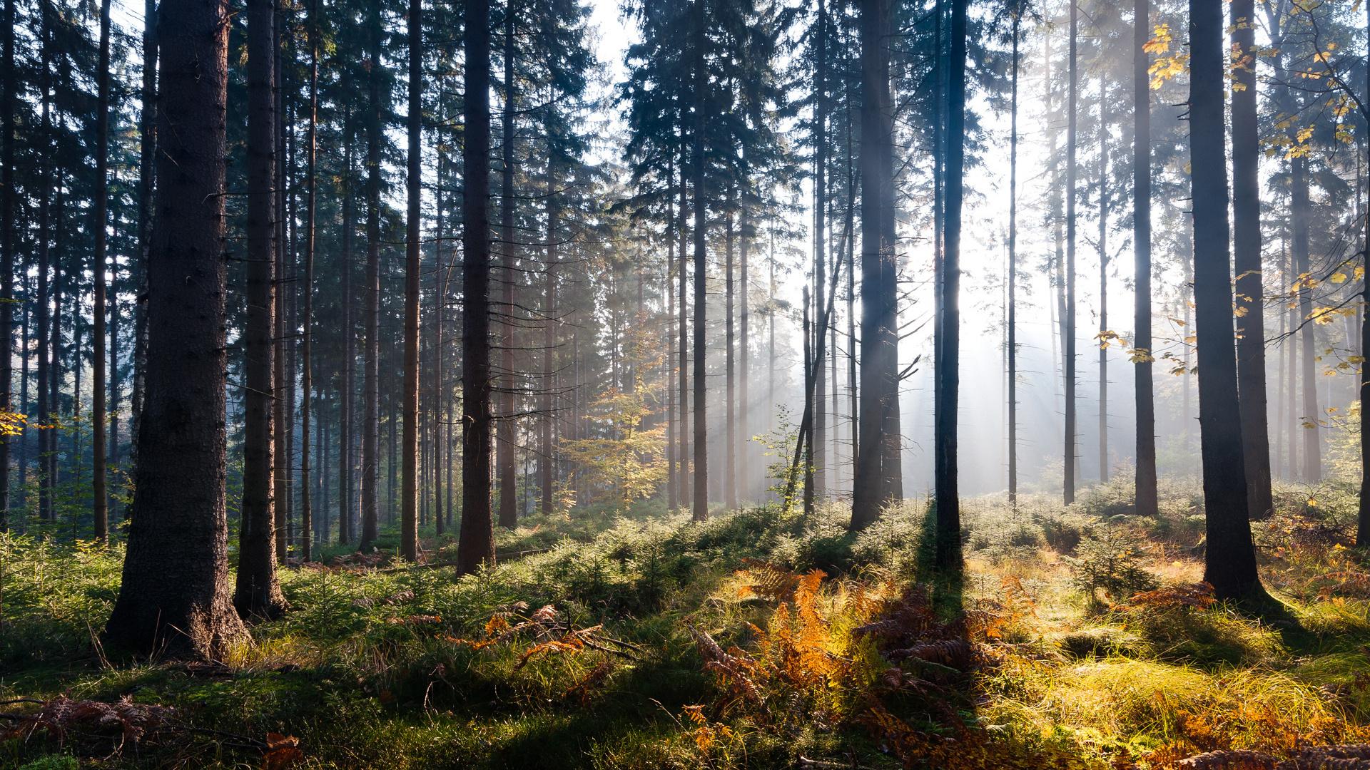 В лесу на природе — 5