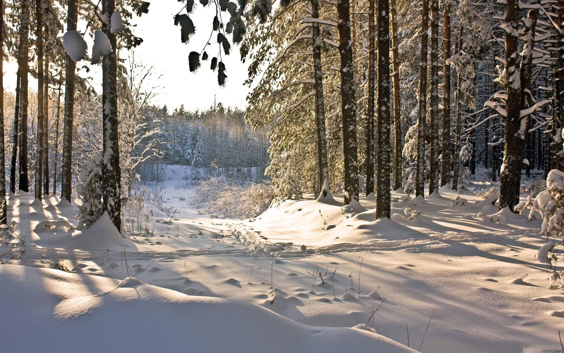 Картинка зима в лесу, брату днем