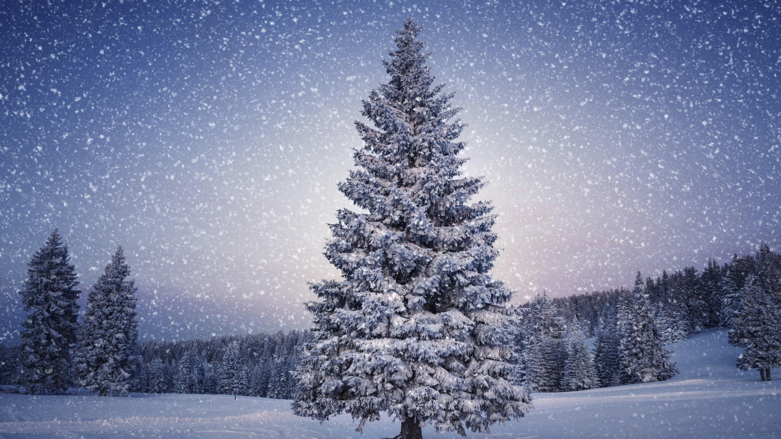 Картинки снег идет, прикольные картинки телята