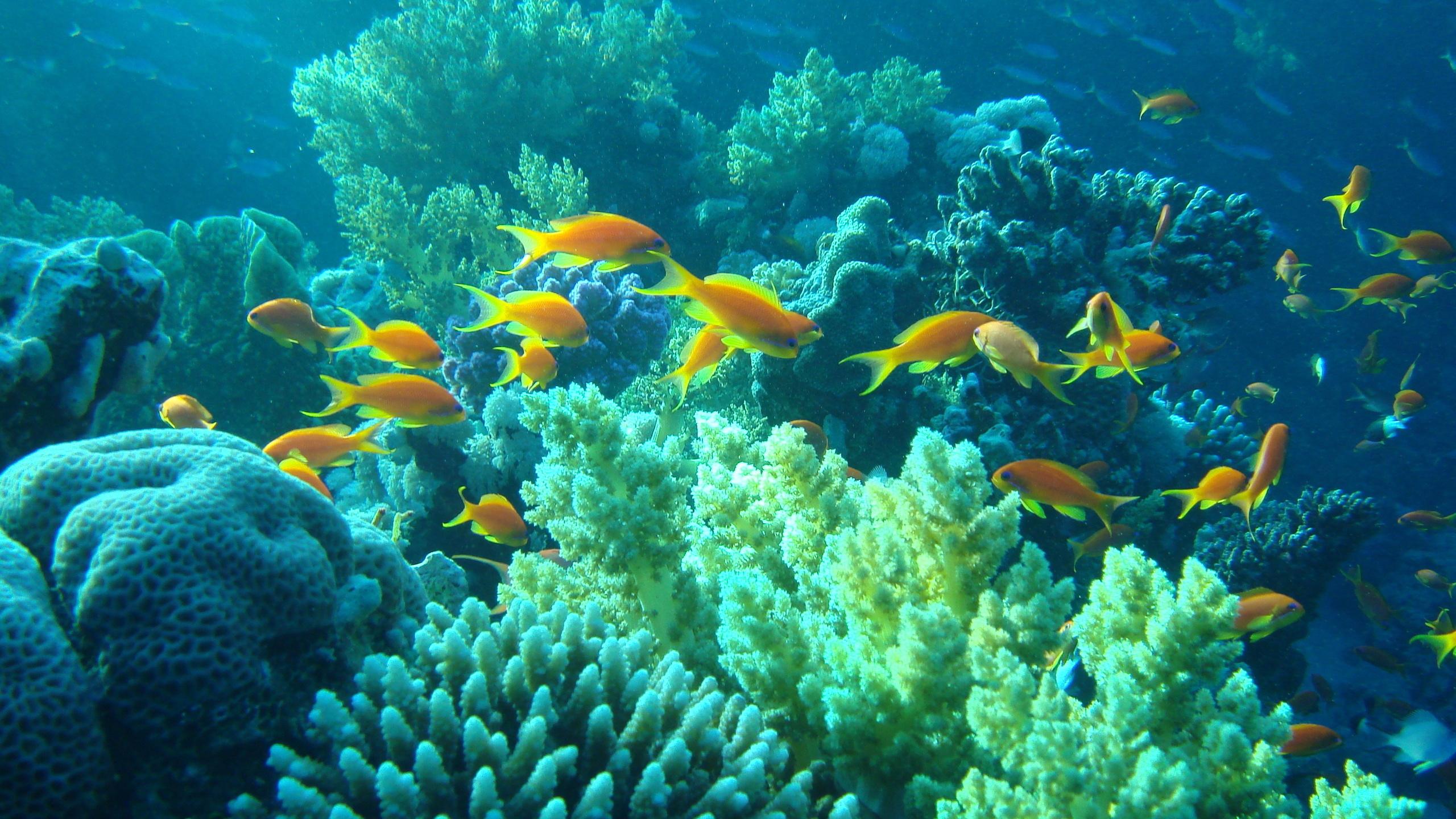многом фото подводного мира башке таким
