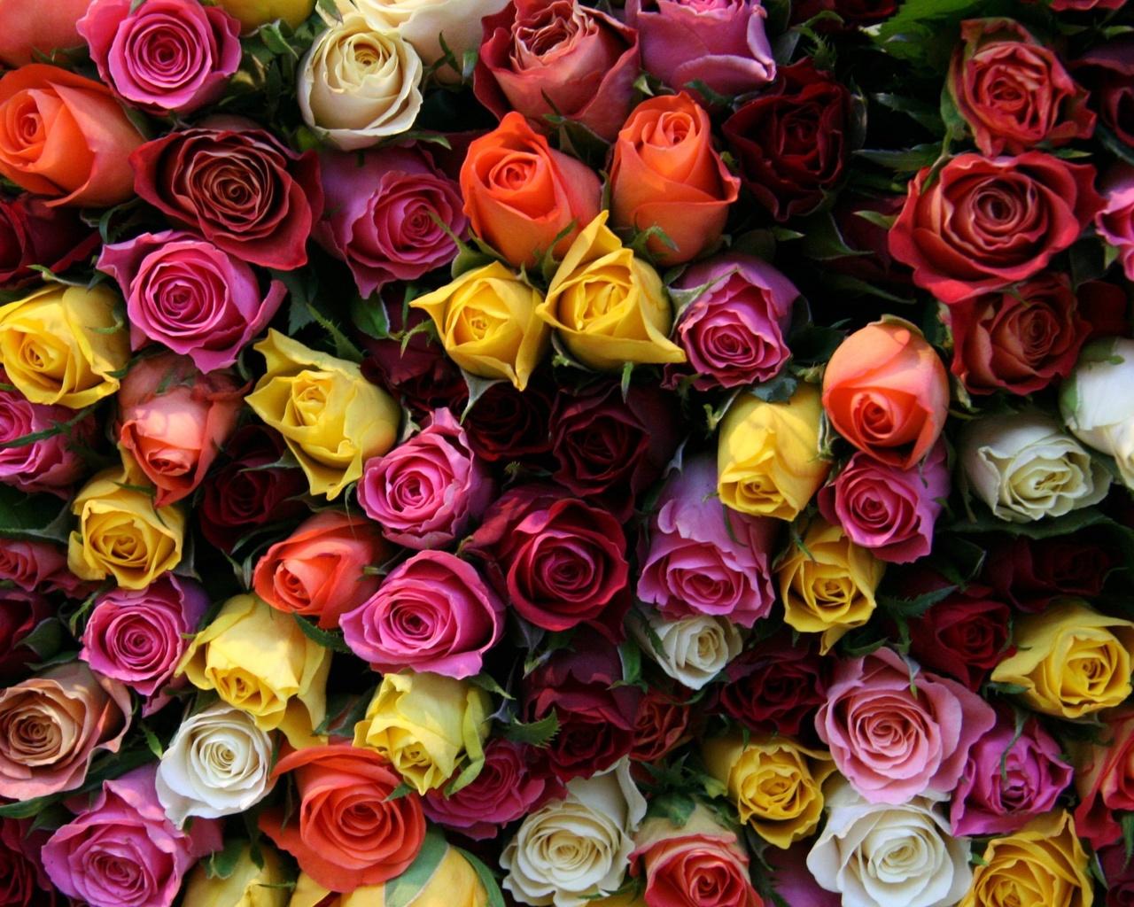 Цветы картинки на телефон с ютуба