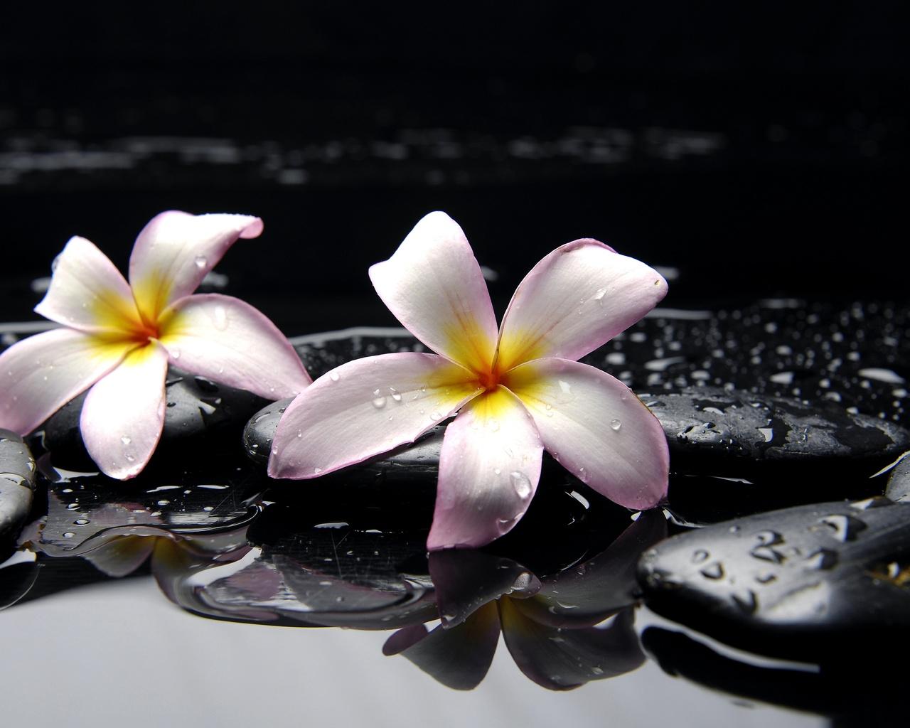 Картинки цветы, вода, желтые, камни, розовые, черные ...