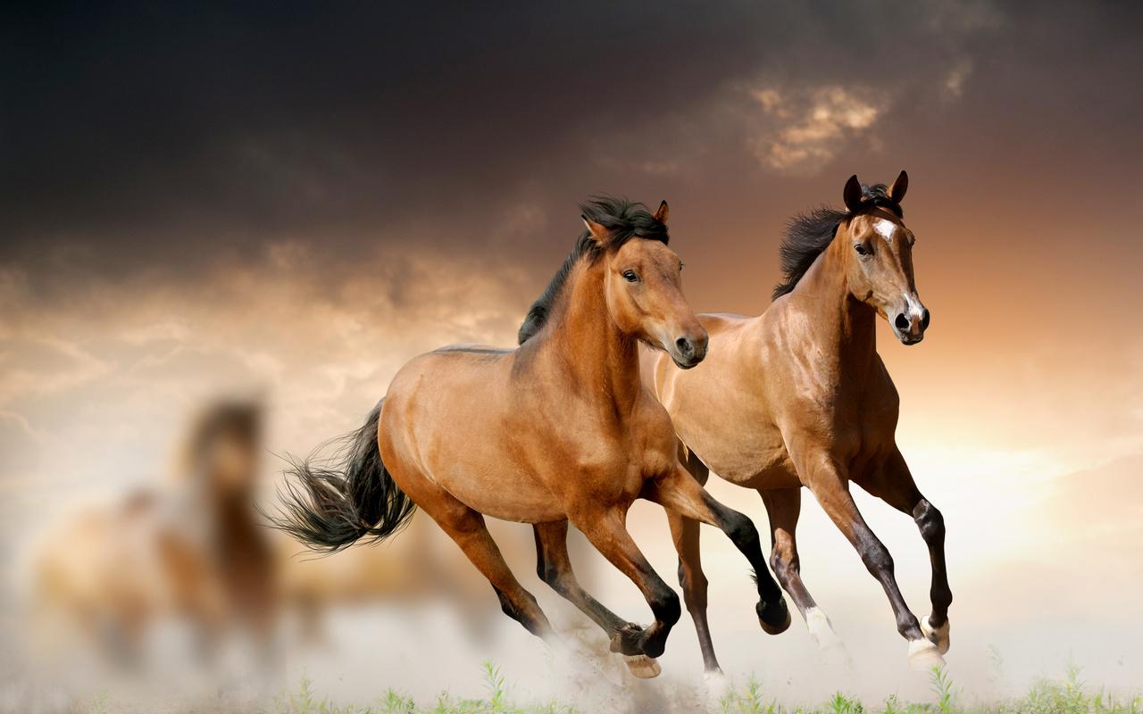 Картинка лошадей в высоком качестве
