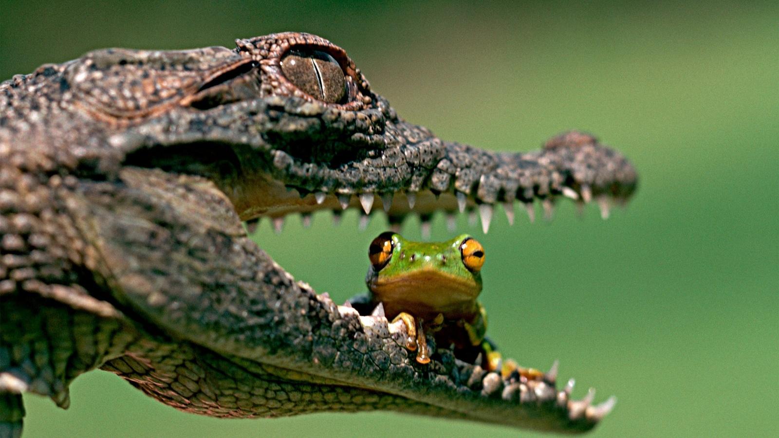 Днем, прикольная картинка крокодил