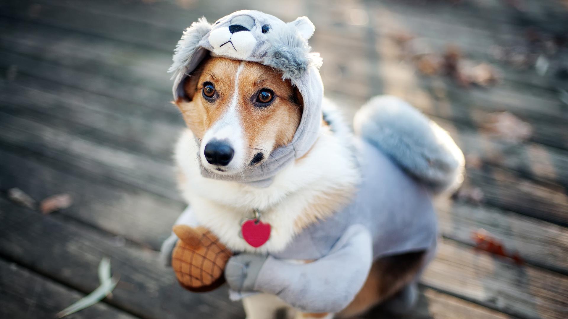 Прикольные фото собак, дню