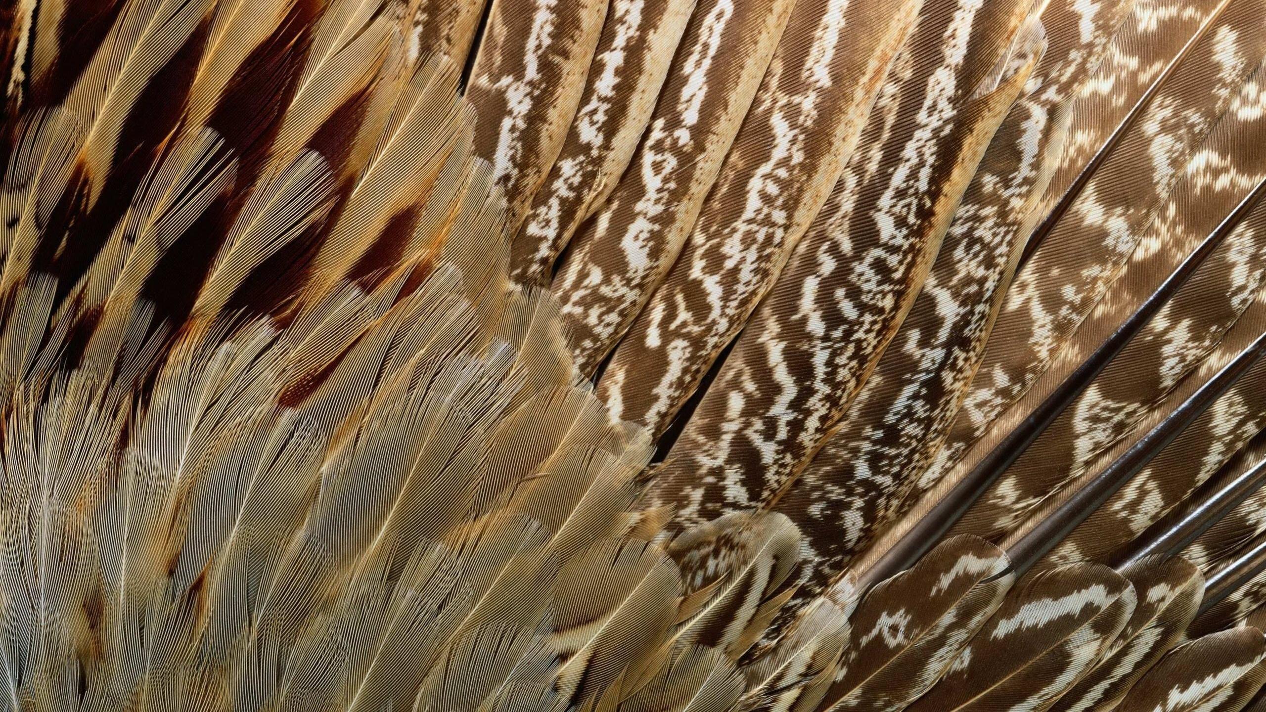 animal texture, Текстура, перья экзотической птицы