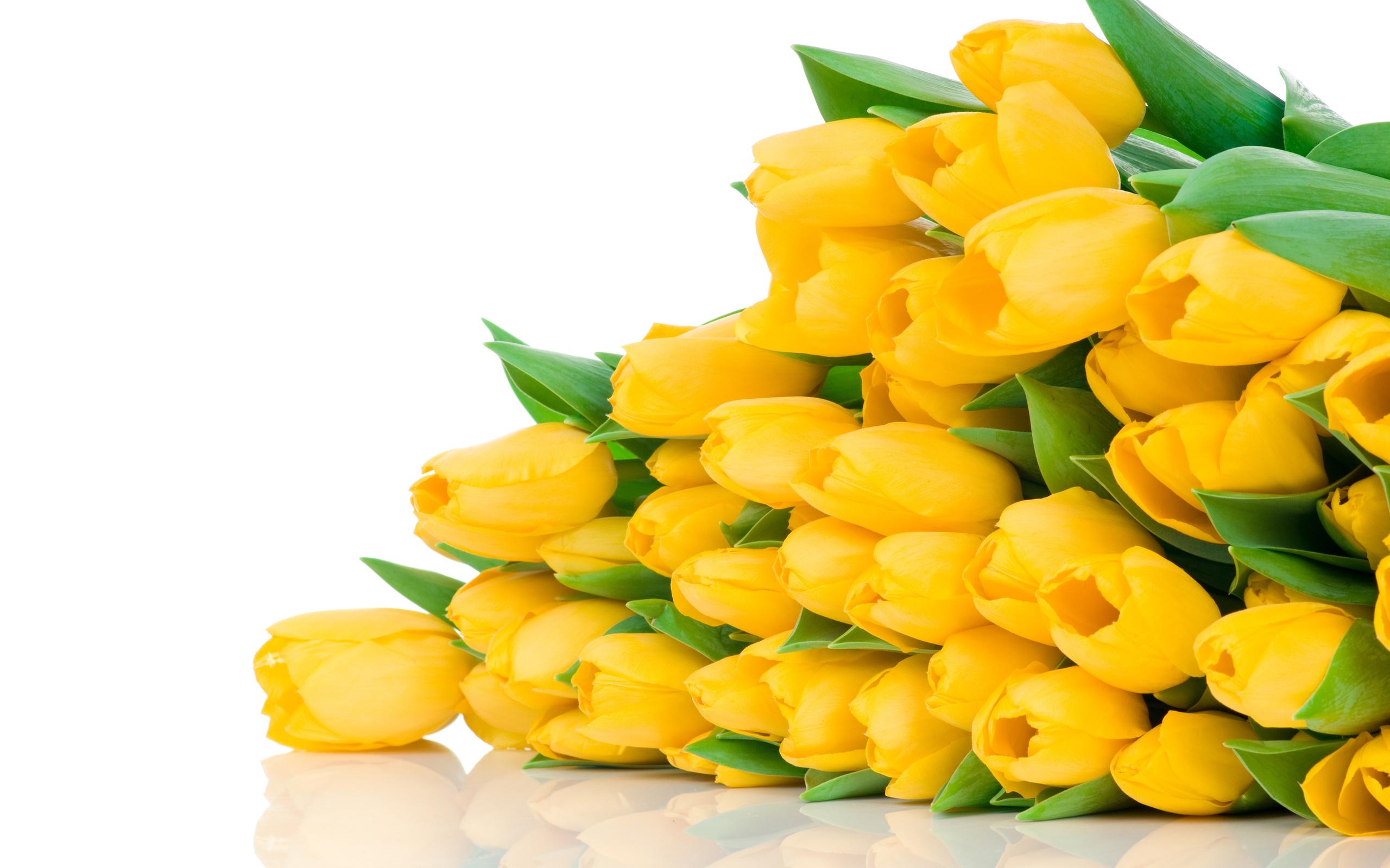 Открытки красивые цветы тюльпаны