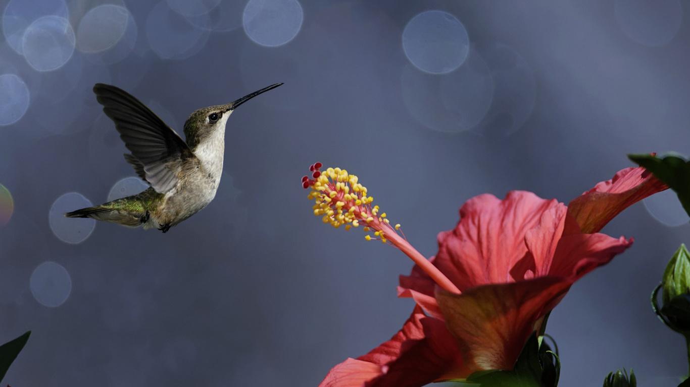 Дети, красивые картинки с цветами бабочками птичками росой дождем