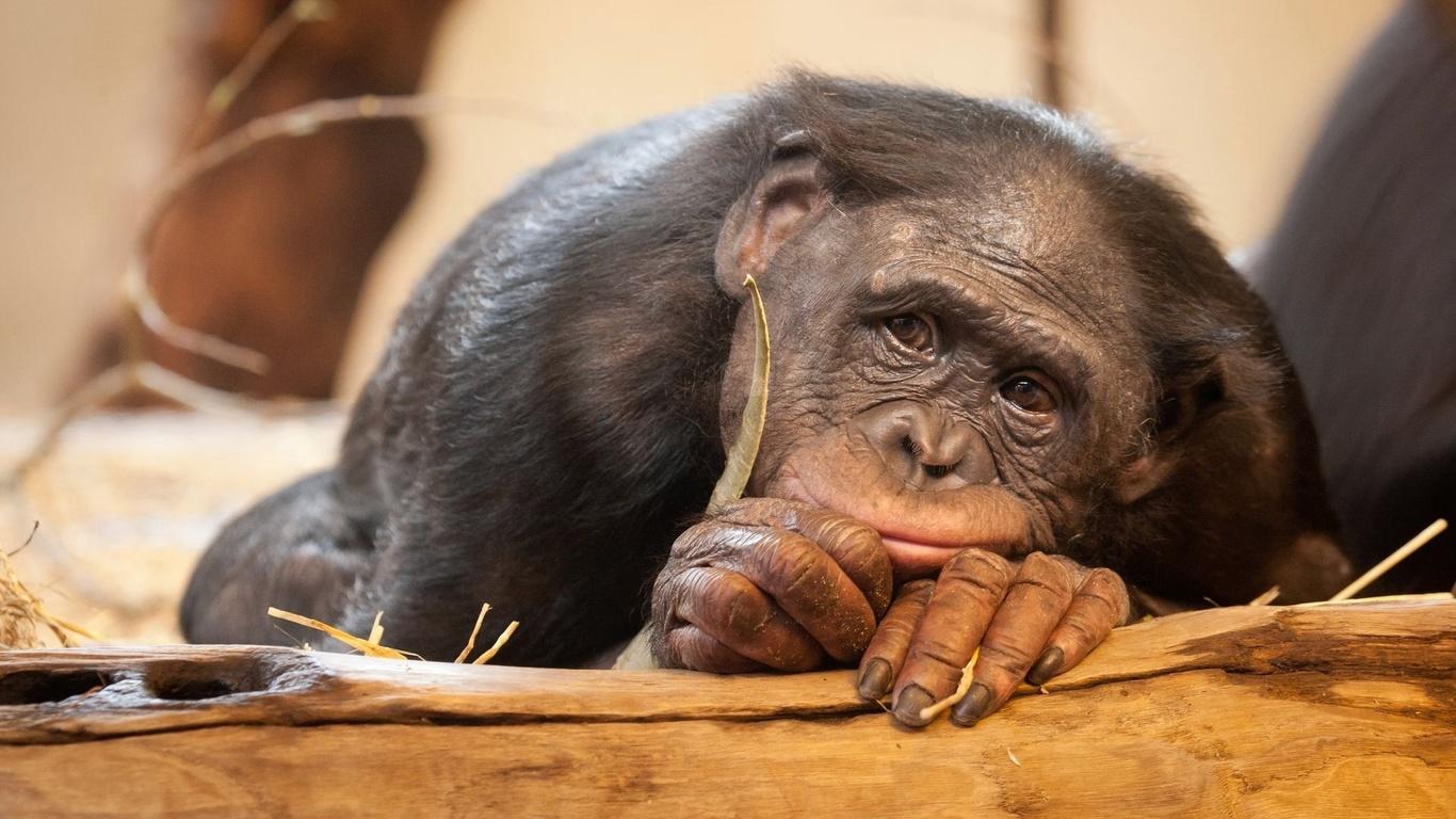Картинки смешные с животными про работу