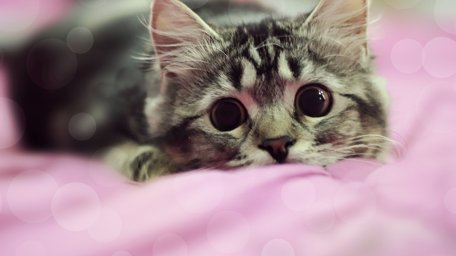 котёнок, морда, большие глаза, игра, засада