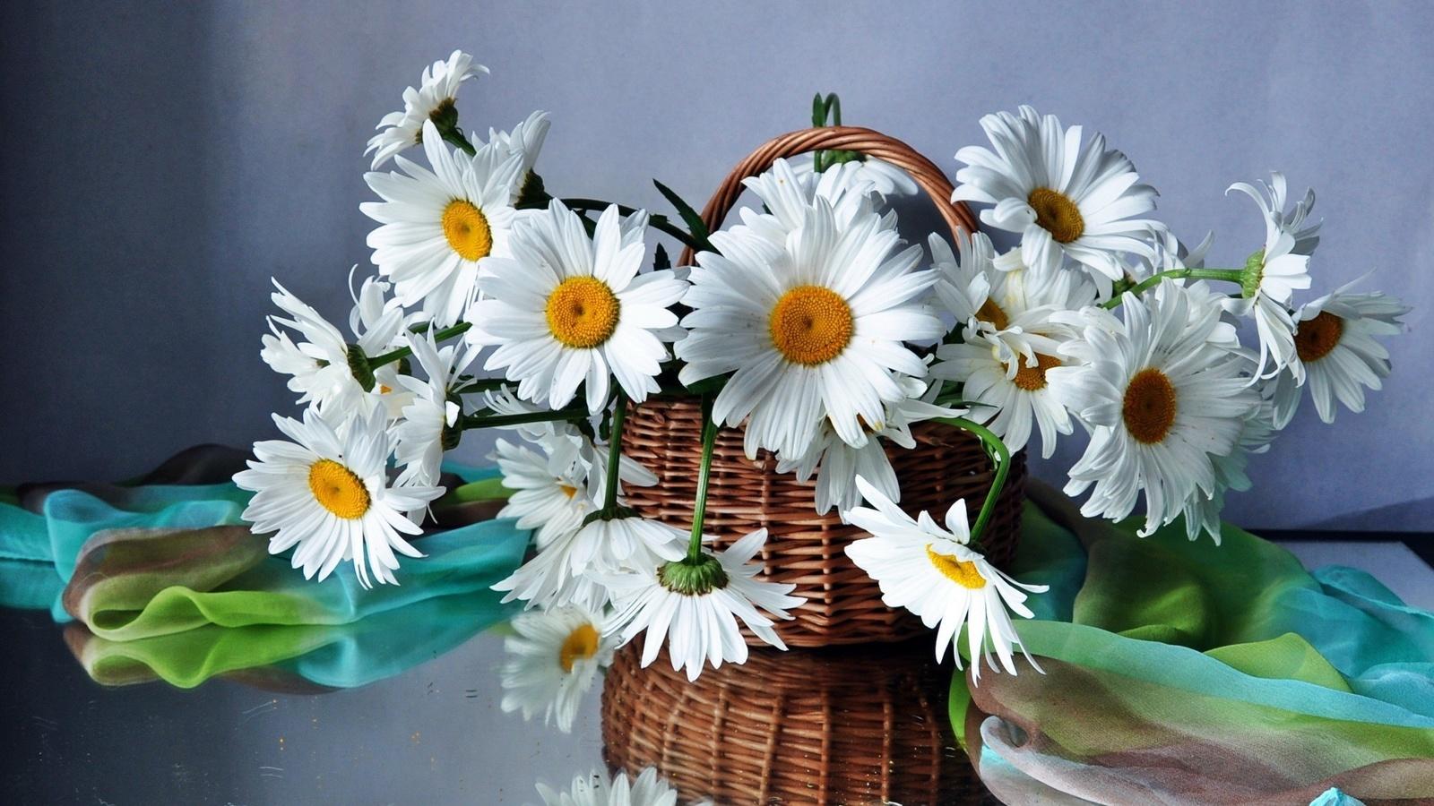 Прикольные, открытки цветов ромашки