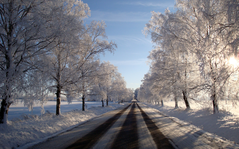 дорога, деревья, снег, мороз, зима