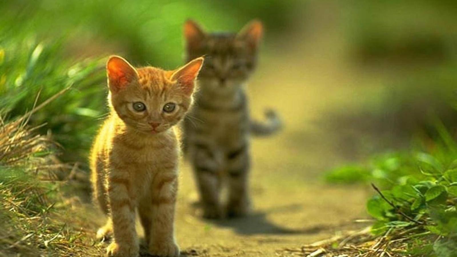 Открытки прогулка котят, смыслом