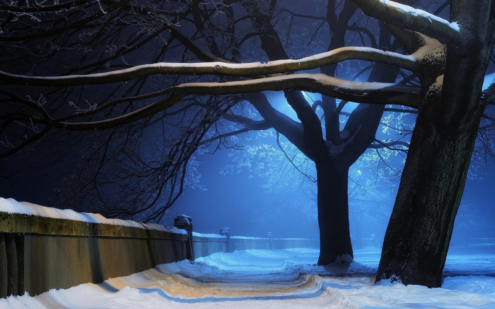 ночь, фонарь, снег, дерево
