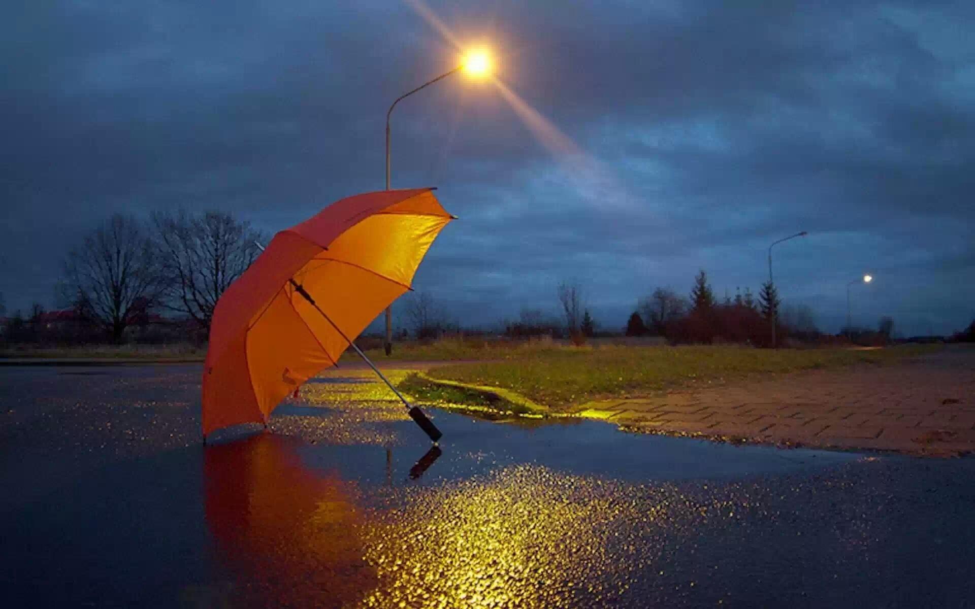 разрастании осень зонт солнце фото них
