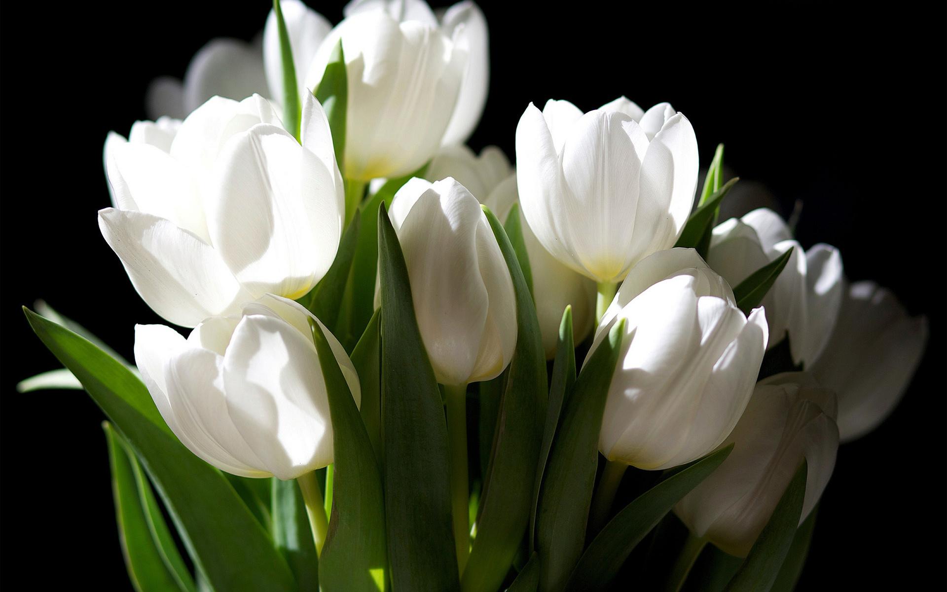 Магазин цветов, букет белых тюльпанов фото